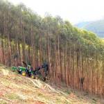Colheita de madeira em áreas montanhosas