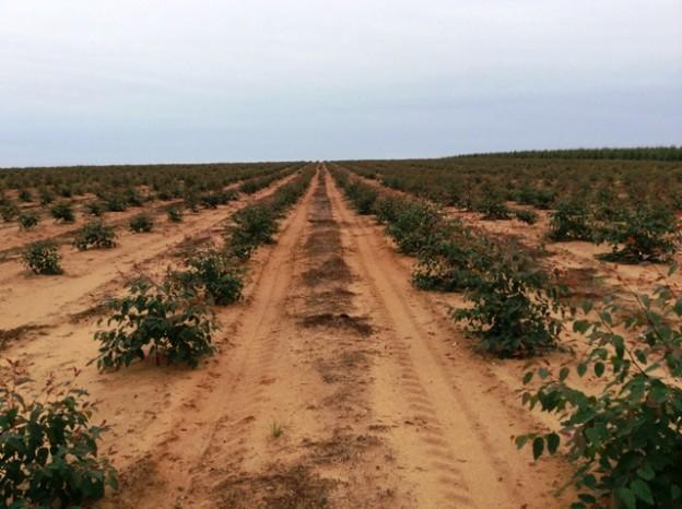 Aplicação de herbicida em eucalipto - Crédito Rudolf Woch