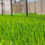 Negócio de Agricultura de Mudas Sadias de cana é incrementado com utilização de biofábrica móvel