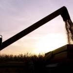 Molibdênio via sementes incrementa a produção de milho