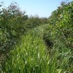Controle eficiente de plantas daninhas em eucalipto