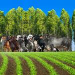 Integração Lavoura-Pecuária-Floresta: 3ª revolução do agronegócio