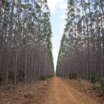 Definida a programação oficial do MS Florestal