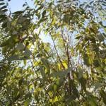 Nutrição foliar garante correção imediata das deficiências