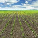 Fertilizantes especiais – Um novo patamar de produtividade