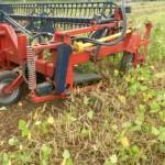 Colheita mecanizada não prejudica a qualidade do feijão