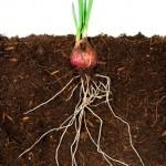 O papel do solo para a produção mundial de alimentos será debatido no Brasil em 2018