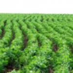 Pedro Afonso (TO) se destaca na produção de grãos