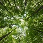 Três Lagoas Florestal supera expectativas e movimenta R$ 60 milhões em negócios