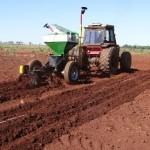 Plantio é a operação mais importante na implantação florestal