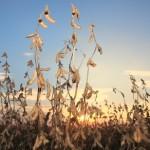 Resultados de produtividade da soja