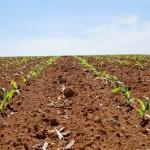 Complexo orgânico para recuperação da vida do solo é fundamental