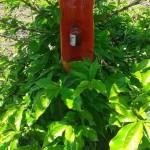 O uso de mulchings biodegradáveis na agricultura moderna