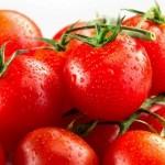 Tomatec – Produção ecológica e lucrativa
