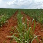 Simpósio de Agricultura de Precisão e Mecanização em Cana-de-açúcar (SPMEC)