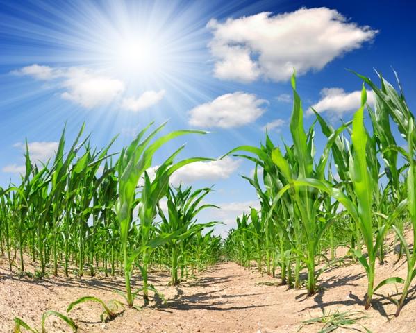 Resultado de imagem para uso de aminoacidos na agricultura