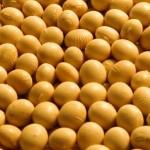Cultivares de soja da Embrapa são produzidas e comercializadas por sementeiros no Mato Grosso