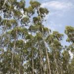Simpósio sobre Tecnologias de Produção Florestal