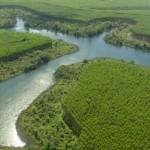 Reflorestamentos com espécies alternativas são oportunidades de mercado