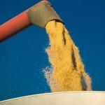 Aumenta exportação e também rentabilidade dos milhocultores