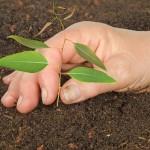Os ácidos húmicos e seus efeitos sobre as florestas