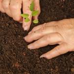 Mudas de espécies florestais vão recompor nascentes e matas ciliares