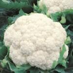 Sementes híbridas garantem mais segurança no plantio de couve-flor em tempos de intensa variação climática