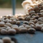Prazo para inscrição de trabalhos sobre feijão-caupi termina dia 31 de março