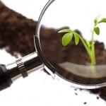 Diagnósticos da fertilidade dos solos e do estado nutricional das plantas