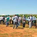 Cultura do milho atrai centenas de participantes ao Fundação MT em Campo 2016 – 2ª Safra