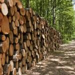 BridgeFlorestal –Inovando o relacionamento do produtor florestal com o mercado