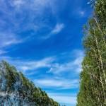 Aplicação de fósforo pode dobrar produtividade dos plantios de eucalipto