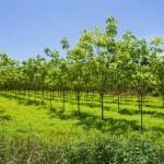 Bayer lança o herbicida Esplanade® para reflorestamento