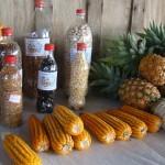 Feira agrícola promove o resgate e a manutenção das sementes crioulas