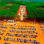 O evento mais aguardado pelo mercado florestal já tem data marcada e local definido