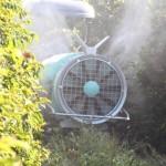 Óleo usado em pulverizações pode queimar folhas do cafeeiro