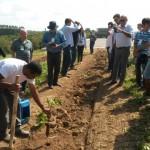 Dia de Campo do Cedro Australiano atrai participantes de todo o Brasil