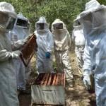 Seminário irá discutir as potencialidades da apicultura no Norte de Minas Gerais