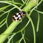 Defensivo biológico –Para ser bom, primeiro tem de ser legal