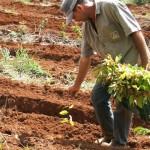 Fertirrigação reduz replantio de florestas