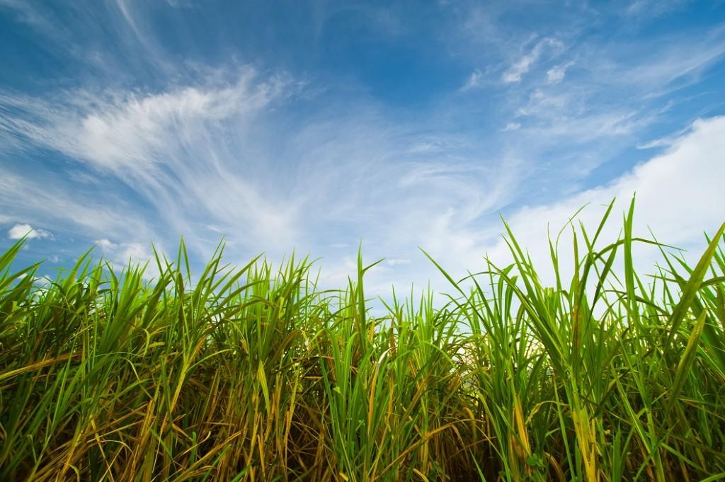 Um solo com boa fertilidade garantirá maiores produtividades da cana - CréditosShutterstock