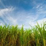 Clima favorece produção de cana-de-açúcar em Minas Gerais