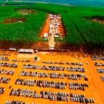 Expoforest 2018 –O evento mais aguardado pelo mercado florestal