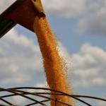 Como produzir mais na safrinha