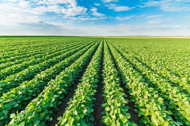 Uma média de dez materiais comerciais têm se destacado nas lavouras de soja - Crédito Shutterstock