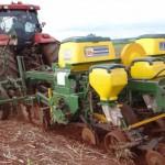 Amendoim sobre palhada de cana –Mecanização vem com força total