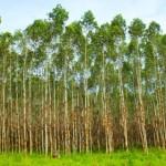 Novidade –Guia Prático de Manejo Florestal