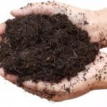 Fertilizantes organominerais aumentam porosidade do solo