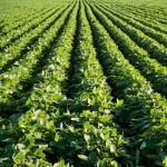 Inovação – plantio agrupado de soja