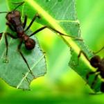 Minas discute manejo de pragas e doenças em florestas